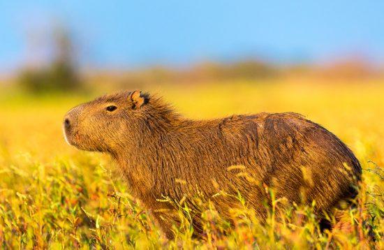 Argentiniens Tierwelt