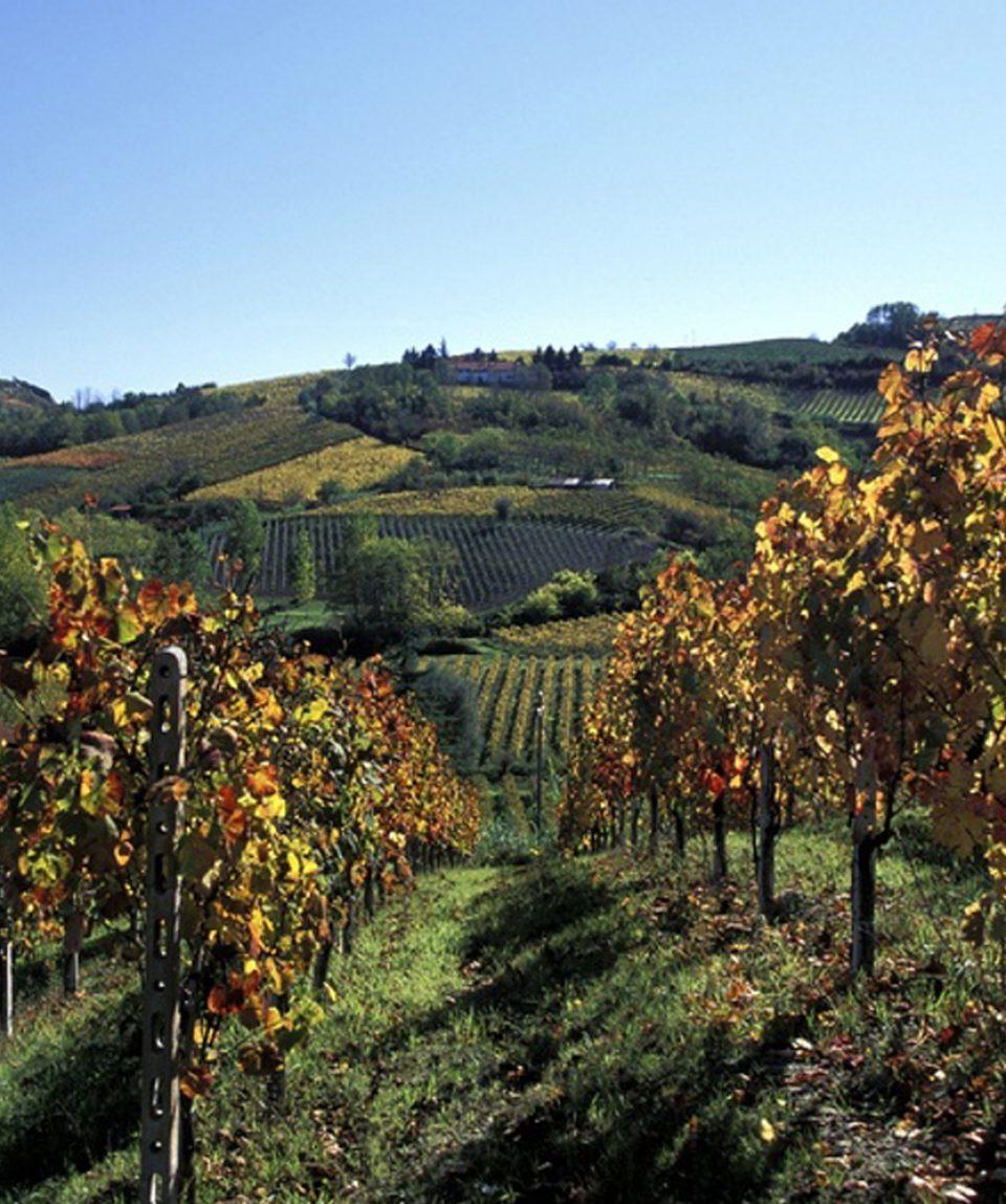 Piemont _CORSO_Gadis_8