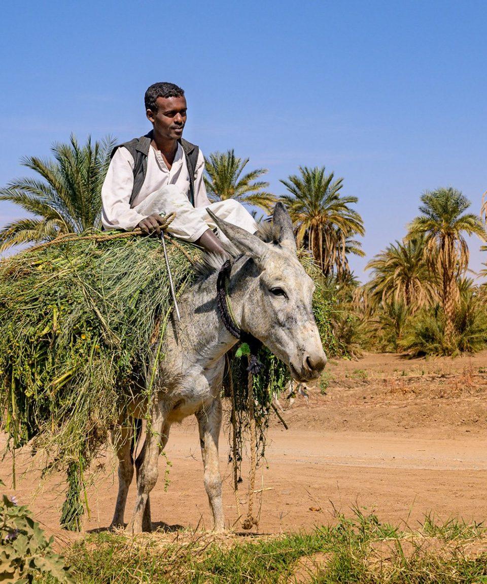 ARR-Reisen_Sudan_Bauer-auf-Esel