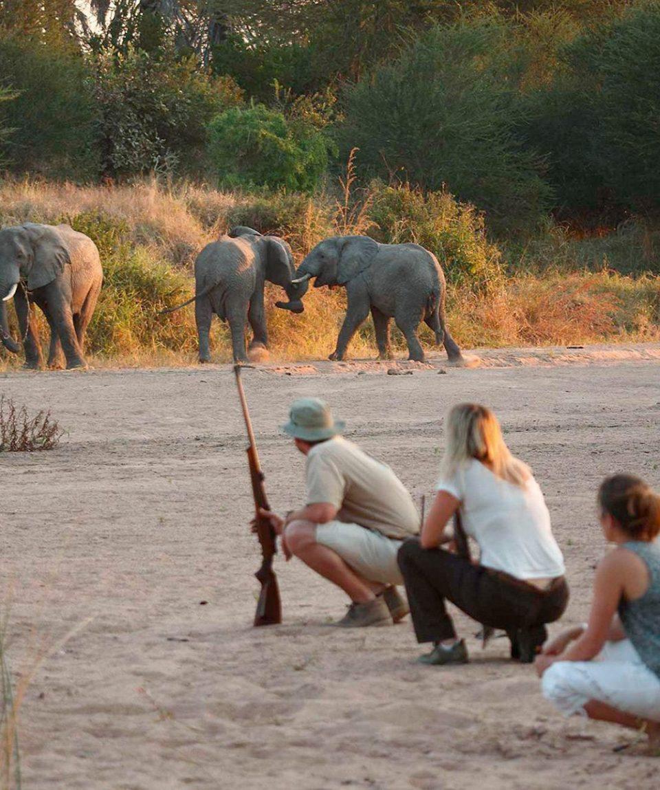 Kidogo_Bush & Beach Safari 5